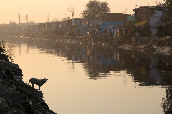_Dog in Canal Looking