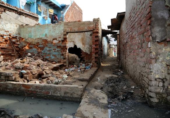 _Pig in Ruins